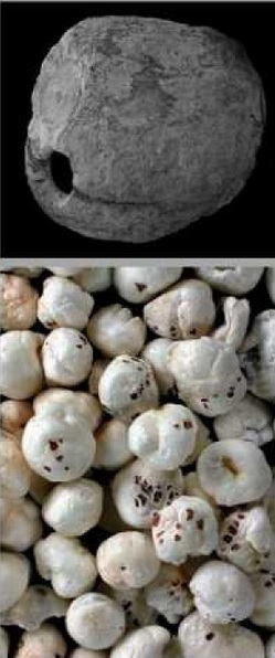 Forntida växter i Israel ger ledtrådar om stenålderskost